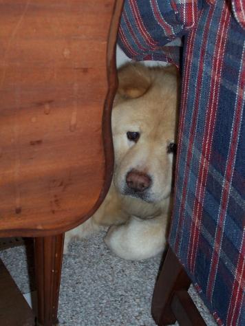 bear_behind_chair