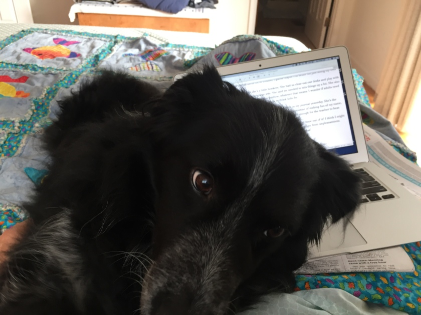 Buddy and MacBook 2JPG