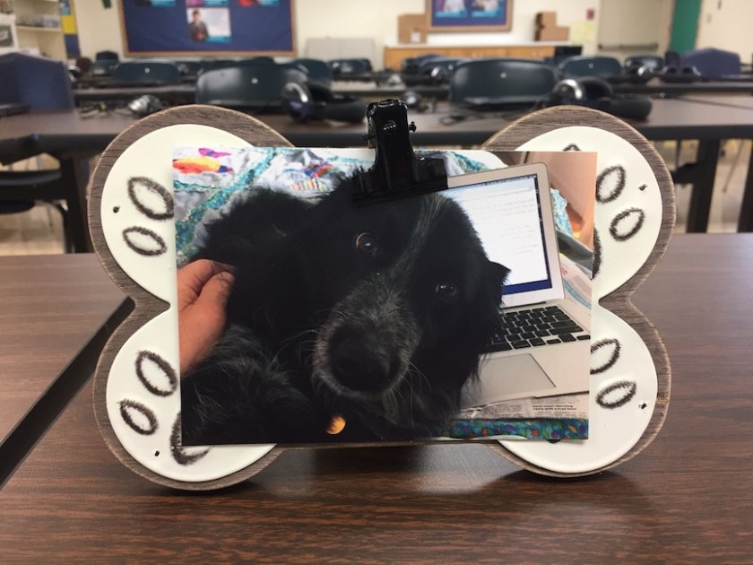 picture of black dog in photo frame