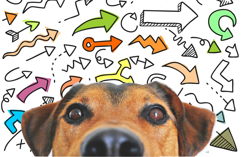 face of dog surrounded by colorful variety of arrows