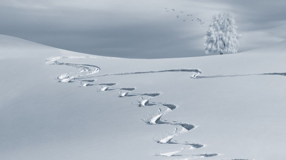 diverging paths in snow