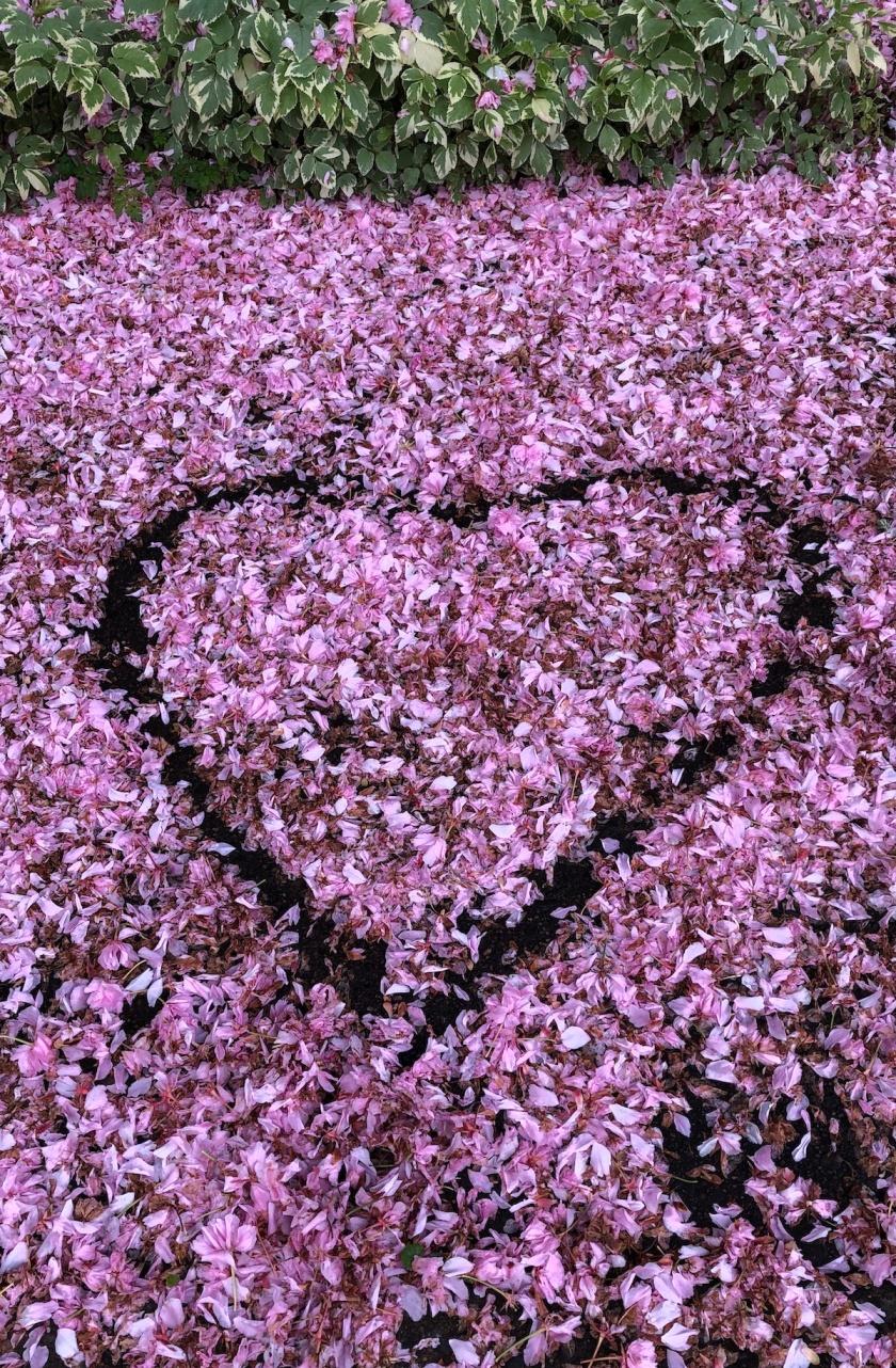 heart in blossom petals reduced