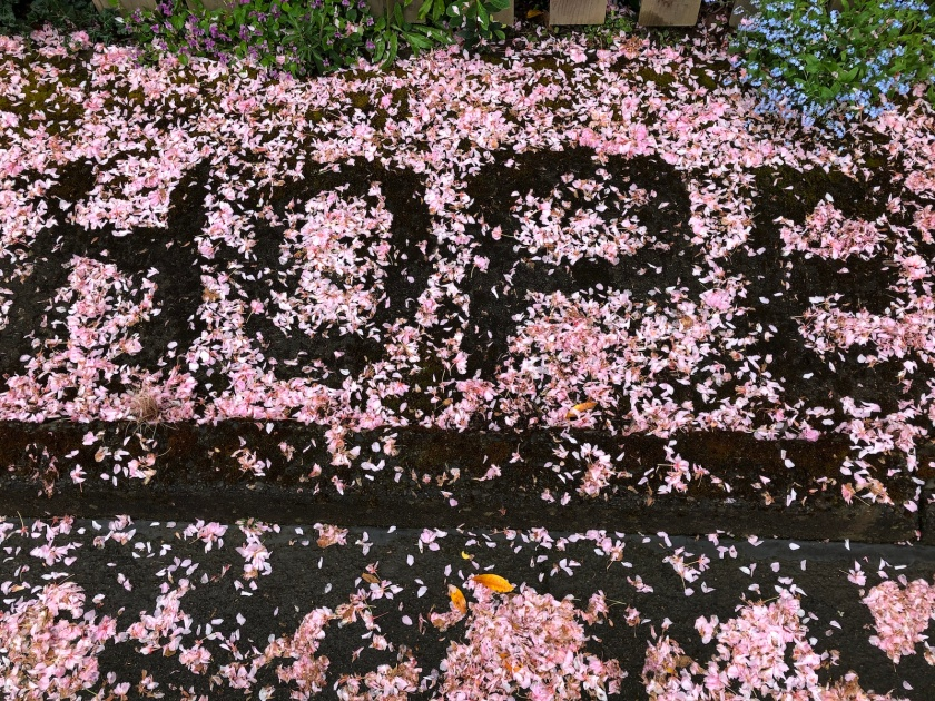 hope in blossom petals reduced