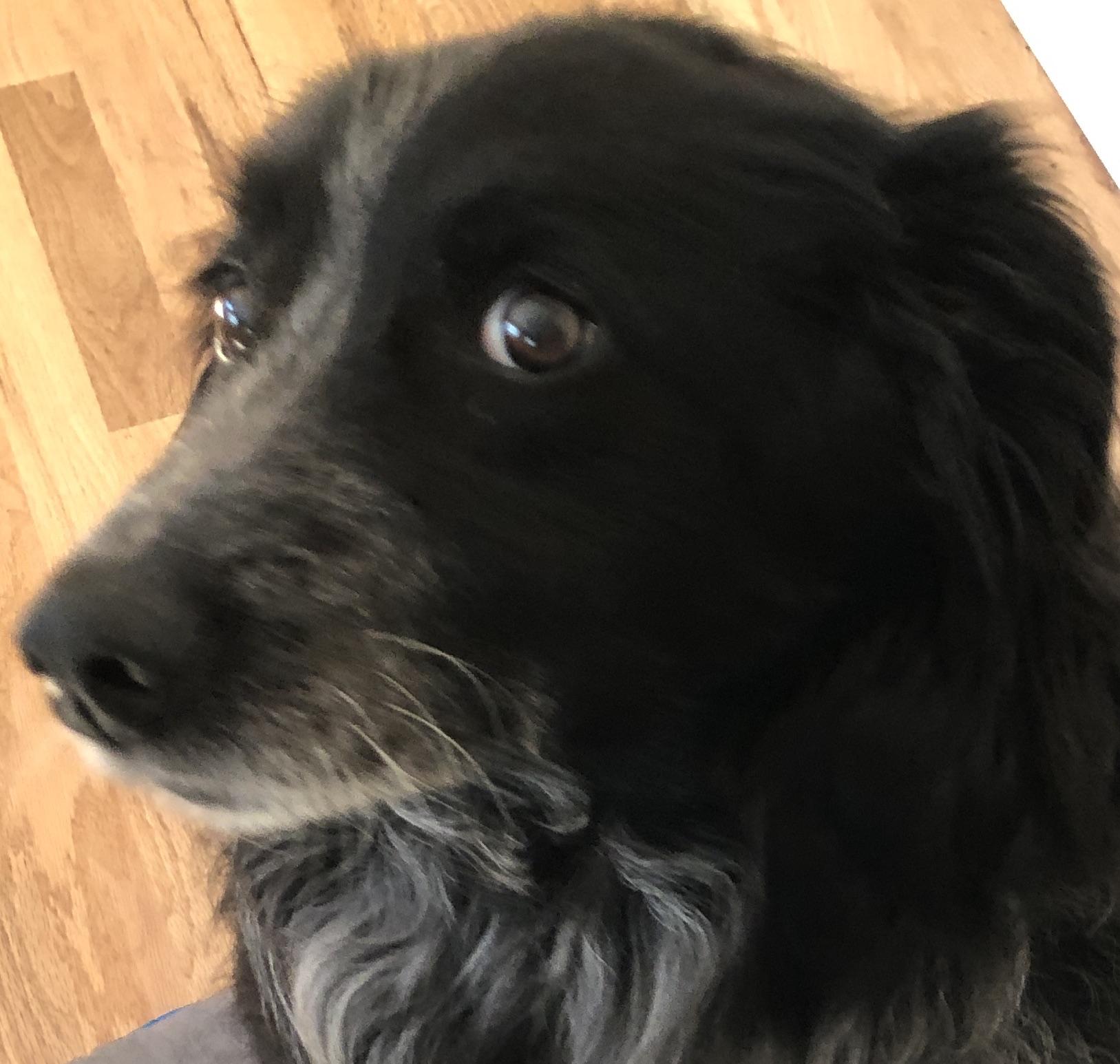 buddy watching reduced